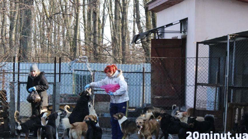 Як живуть собаки у центрі стерилізації в Дичкові