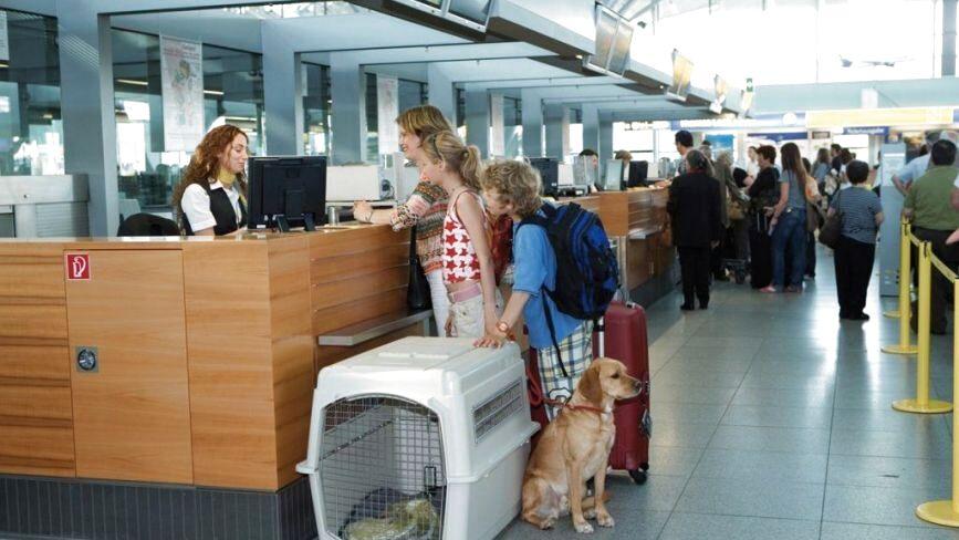 Змінилися правила перевезення домашніх котів і собак за кордон