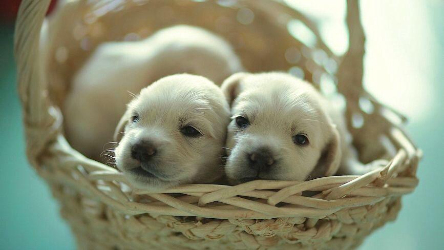У Тернополі одні активісти нарахували 527 безпритульних собак, інші - 7000: яка доля тварин