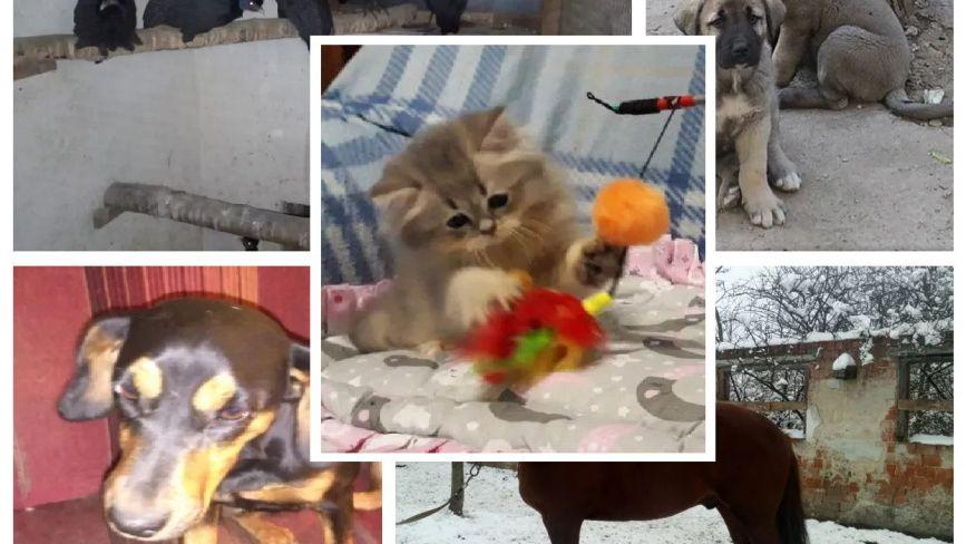 Гончі собаки та породисті жеребці за 96 тис. гривень: що продають тернополяни в інтернеті