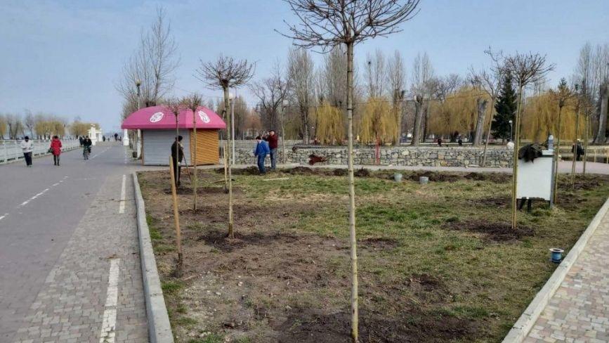 У парках Тернополя висадили екзотичні дерева і кущі
