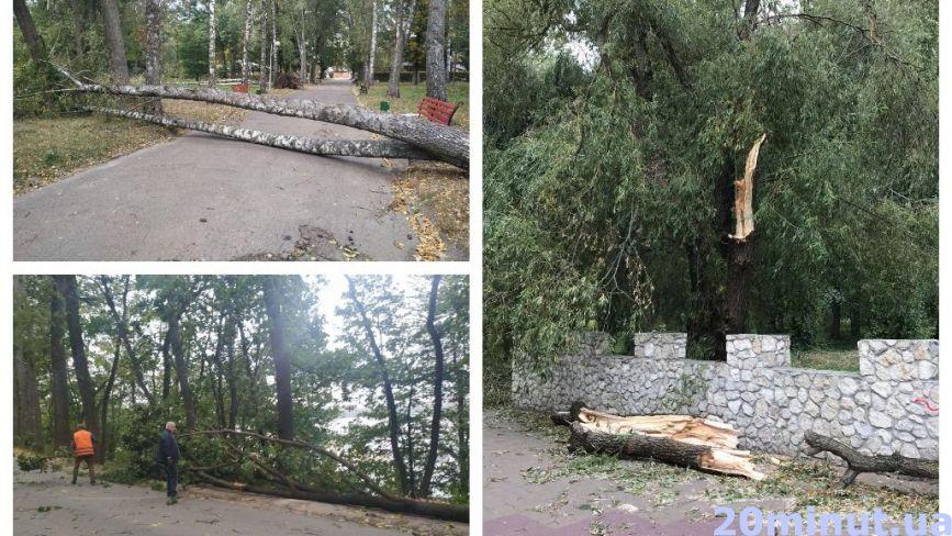 У Тернополі сильний вітер поламав гілки та повалив дерева у парках