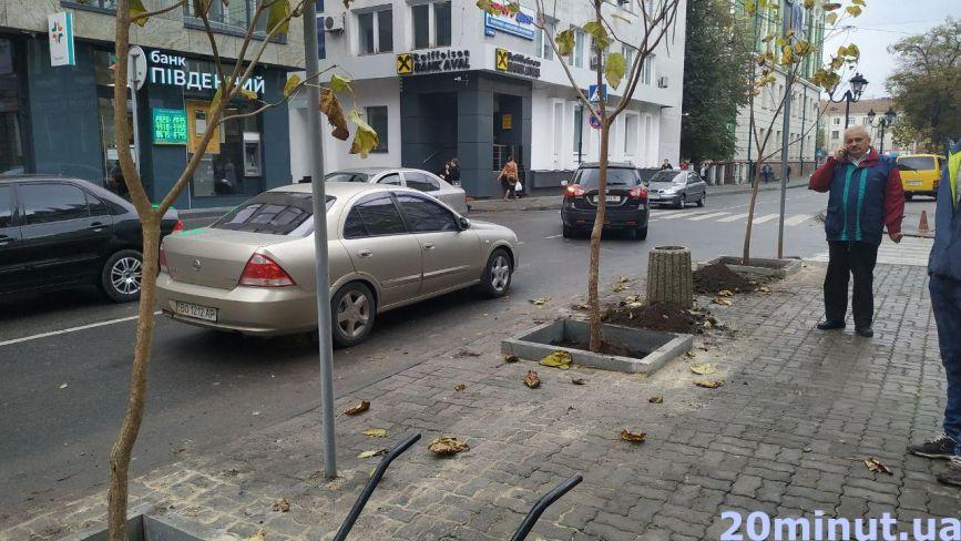Фото дня: на вулиці Йосипа Сліпого висадили молоді катальпи
