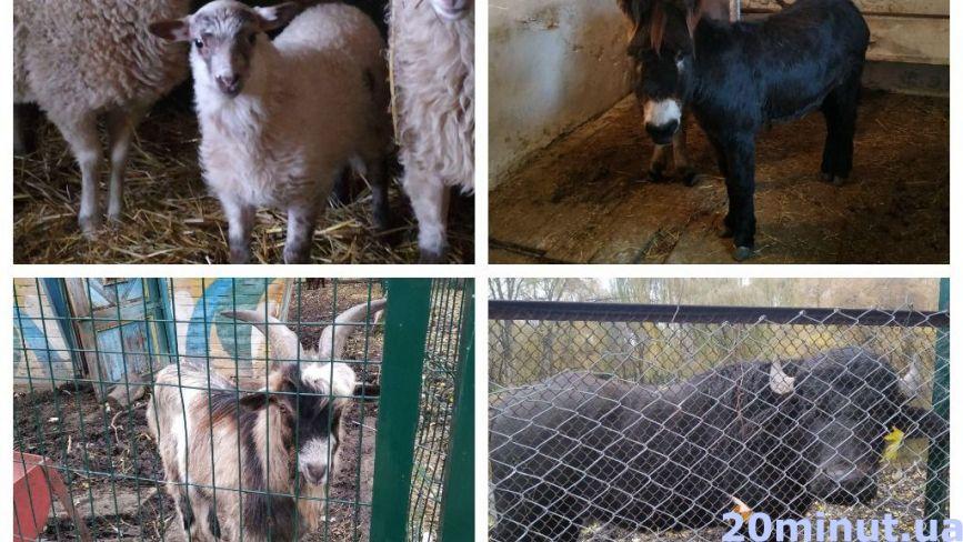 """Лань, буйволи, олені, кози та інші: як живуть тварини в зоокутку «Топільче». Репортаж """"20 хвилин"""""""