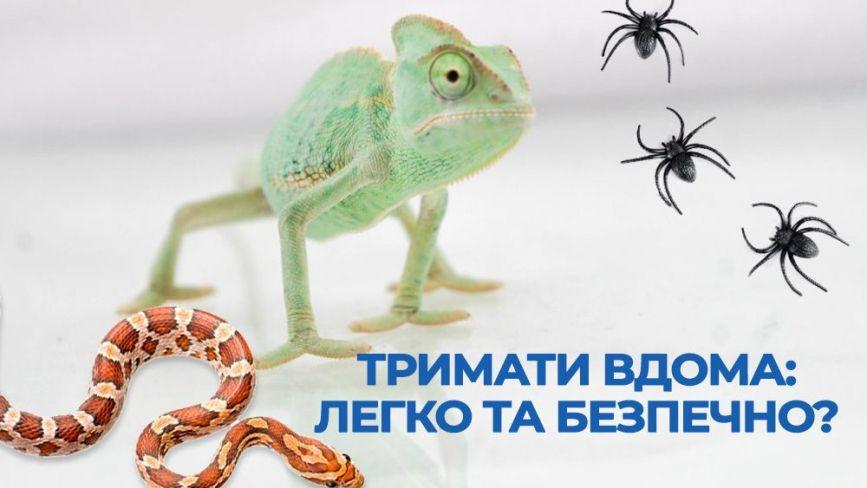 Білки, павуки, змії та хамелеони. Яких ще незвичних тварин мають тернополяни і скільки витрачають на них