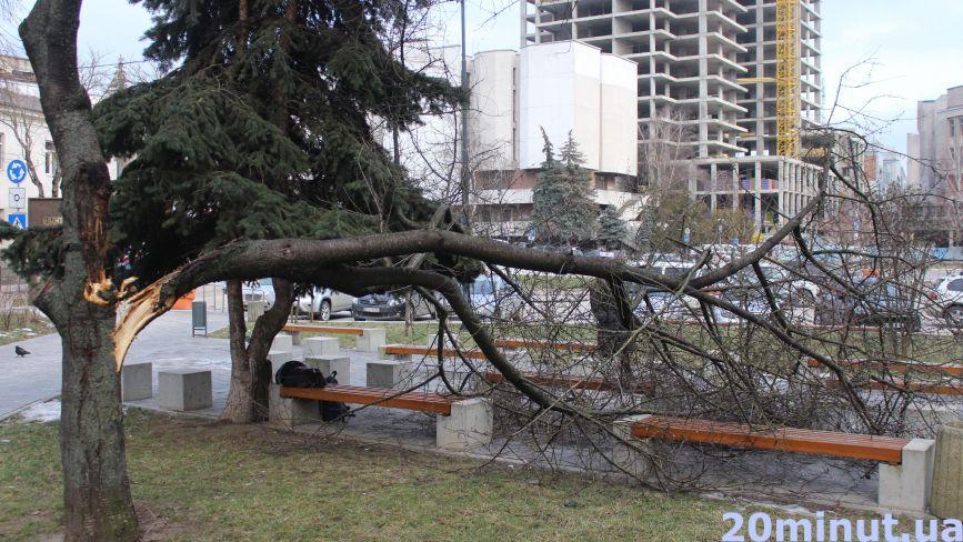 Наслідки негоди: у Сквері волонтерів вітер повалив дерево (ФОТО ДНЯ)