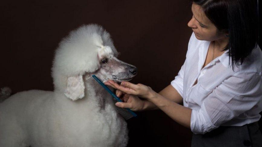 Я успішна! Тернополянка Інна Бучинська вміє зробити домашніх улюбленців красивими