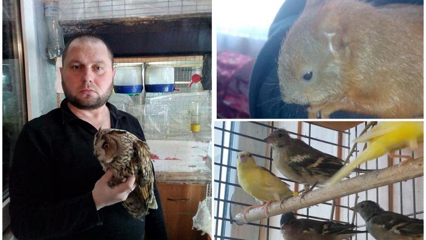 У квартирі тернополянина народились білченята, на балконі в нього понад сотня птахів. Для чого?