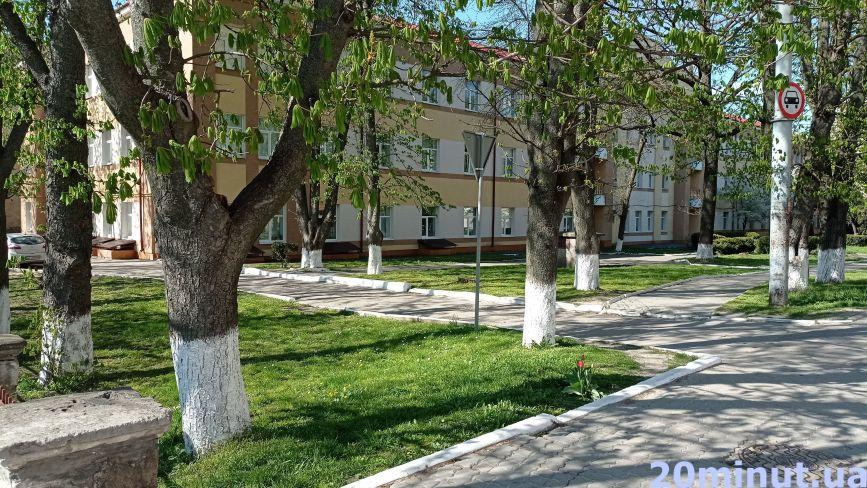 Краса чи пережиток радянщини: тернополяни вибілюють дерева та бордюри. А вам подобається? (ОПИТУВАННЯ)