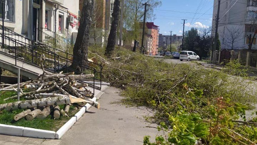 """Турбувалися про людей чи нашкодили? Чому на Березовій порізали """"живі"""" дерева та що каже еколог"""