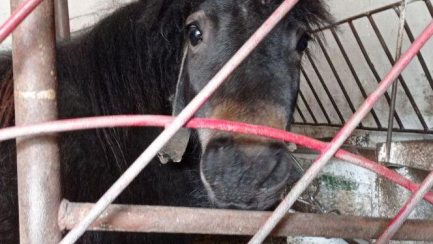 У Тернополі вже готові продавати тварин із «Зоокуточка», але покупців нема. Чому?