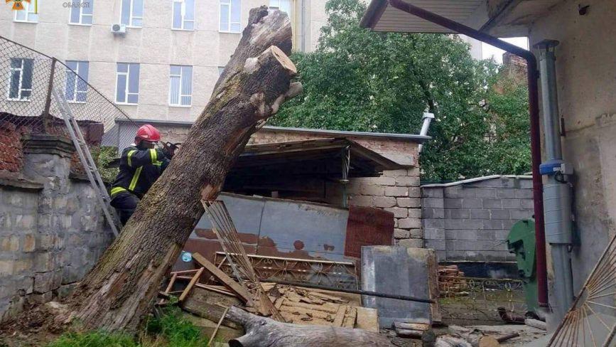 Негода повалила дерева на Тернопільщині