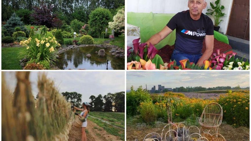 Квітковий рай: ТОП-5 неймовірних полів та садів на Тернопільщині, де роблять фотосесії