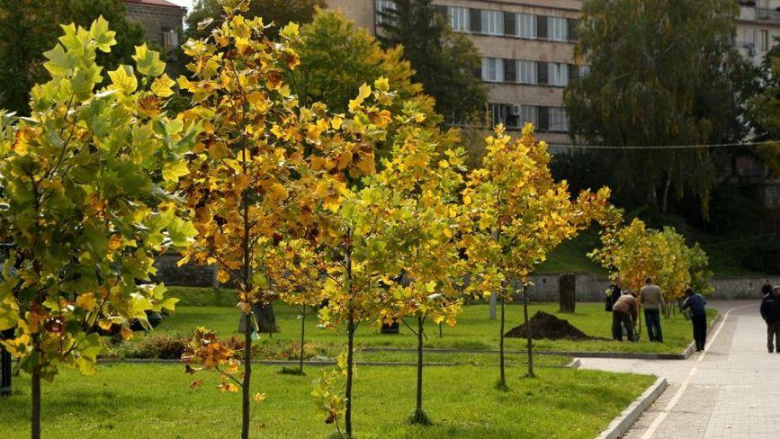 У Тернополі в парку ім. Т. Шевченка висадили тюльпанові дерева (ФОТО)