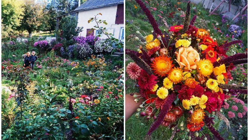Перетворила город у чарівний сад: виростила поле хризантем і айстр. Чи можна до неї на фотосесію?