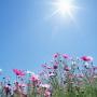 Сонячно та без опадів: погода у Тернополі на 5 липня