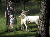 У зоокуточку планують проводити платні екскурсії