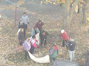 Куди поїде листя з тернопільських дерев