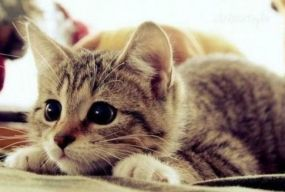Сьогодні, 8 серпня: День альпінізму та котів