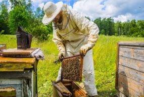 Скільки коштів потрібно новачку, щоб зайнятися бджільництвом