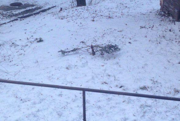 Тернополян у соцмережах обурило, що у дворі зрізали ялинку