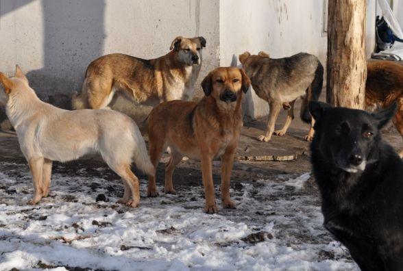 Після трагедії у Петрикові поліція займеться собаками та їхніми власниками