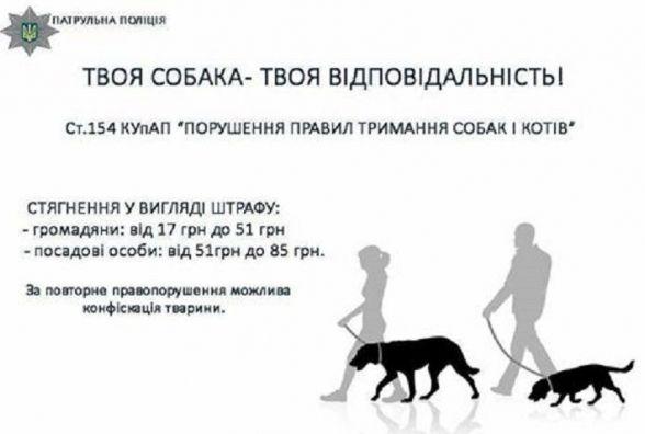 Оштрафували господаря пітбуля через те, що вивів гуляти собаку без намордника