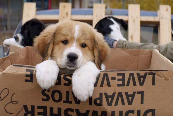 """У кіно розкажуть про """"Життя та мету собаки"""""""