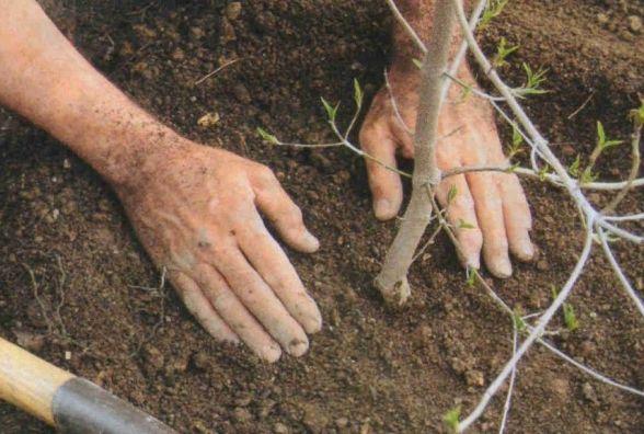 Активісти закликають прийти і посадити дерева на місці незаконних забудов