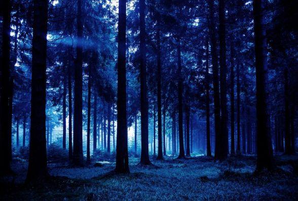 У лісі знайшли тіло 84-річної пенсіонерки, яку розшукували 20 днів