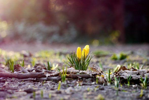 Погода в Тернополі на 21 квітня: ясно, +23