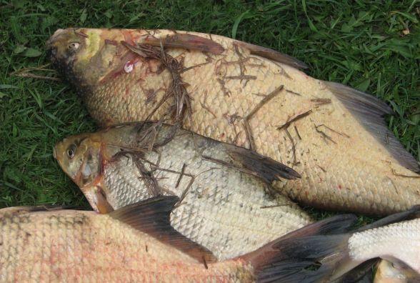 У Зборові браконьєри побили патрулів рибохорони
