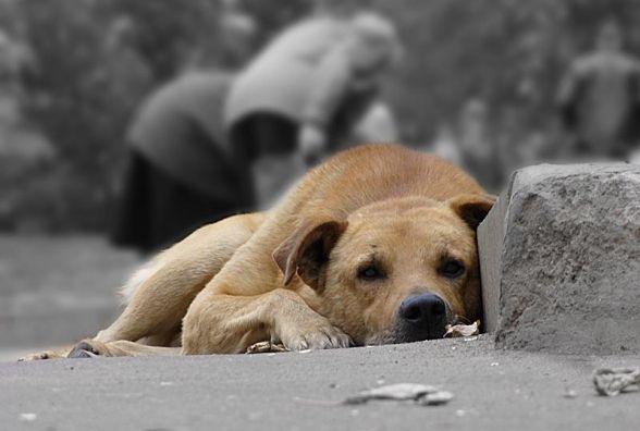 Куди зникають безпритульні тварини? (ЗАПИС ПРЯМОЇ ТРАНСЛЯЦІЇ)