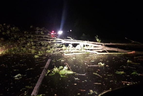 На Тернопільщині буревій поламав дерева