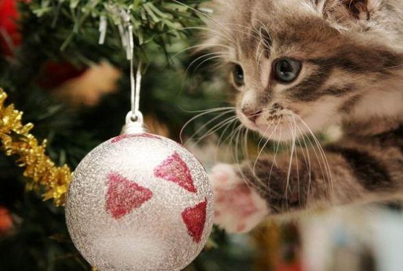 На новорічні та різдвяні свята в українців буде по три вихідні
