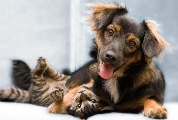 За котів і собак здеруть по 170 грн?