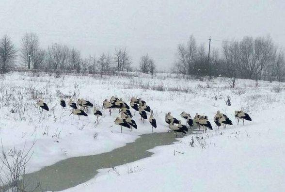 Люди рятують лелек по всій області. Закликають допомагати птахам усіх небайдужих
