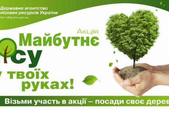 Одні дерева вирубують, інші – садять. На Тернопільщині стало більше дубів і сосен.