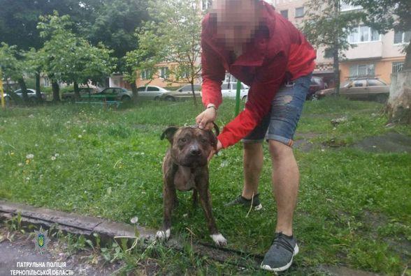 Патрульні оштрафували господаря бійцівської собаки