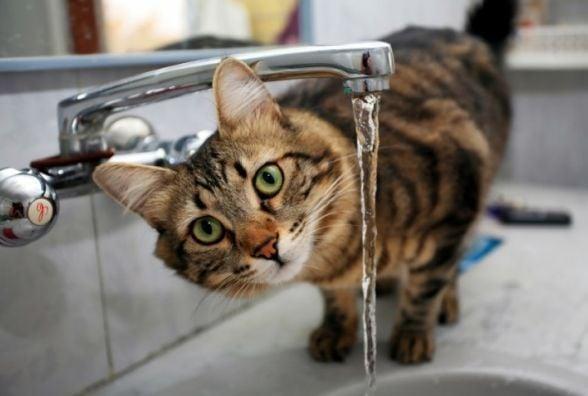 Увага! У Тернополі два дні не буде води