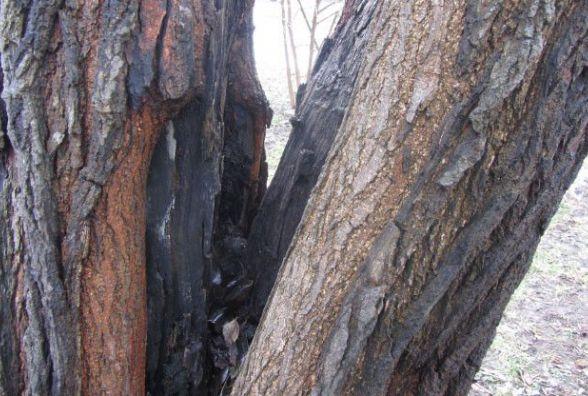 """""""Боїмося, що дерево впаде і може прибити дітей"""""""