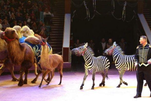 Тернополянка подала петицію з проханням заборонити пересувні цирки з тваринами в Тернополі