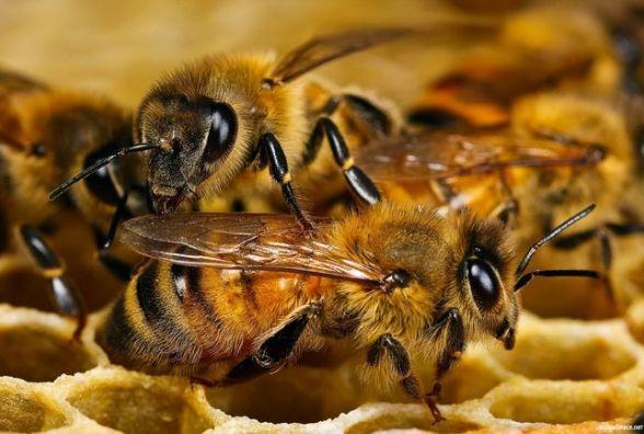 На Тернопільщині масово загинули бджоли. Поліція з'ясовує причину