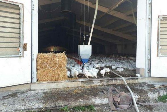 На Тернопільщині горіла птахоферма, де було близько 40 тис. курей