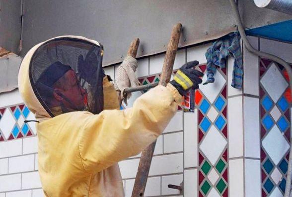 Тернопільщину атакують шершні. Рятувальники вивезли 9 гнізд