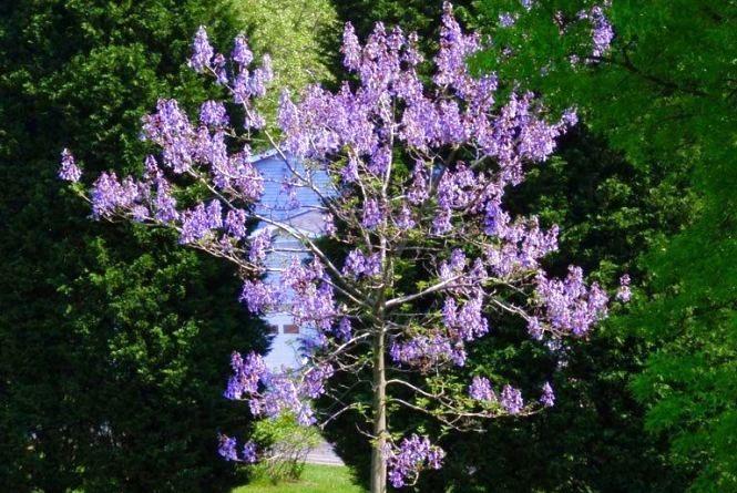 Острівець кохання зроблять фіолетовим