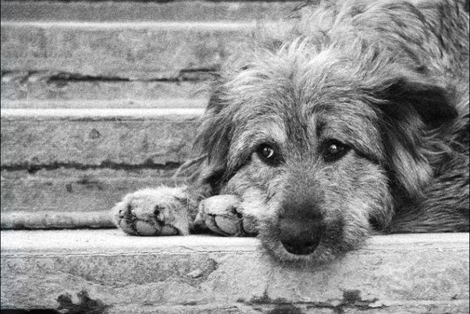 Всесвітній день бездомних тварин відзначають 20 серпня