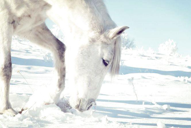 На Збаражчині юнак вже не вперше вкрав коня і підводу