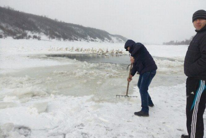 Жителі села, де на Дністрі замерзають лебеді, просять про допомогу