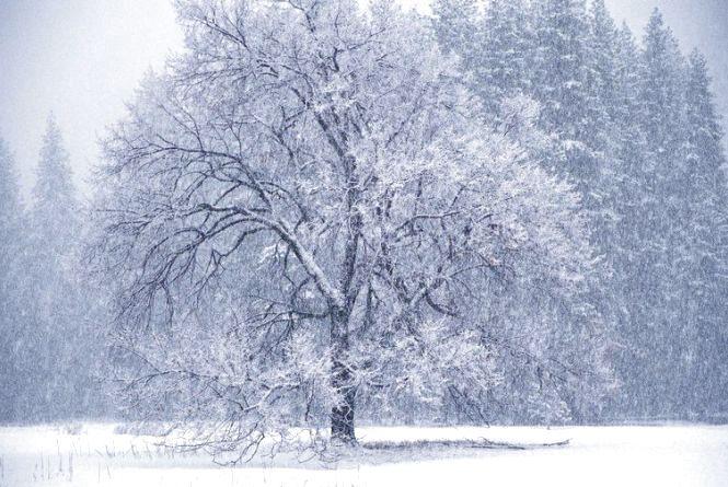 Погода в Тернополі на 13 січня: без опадів, -2°